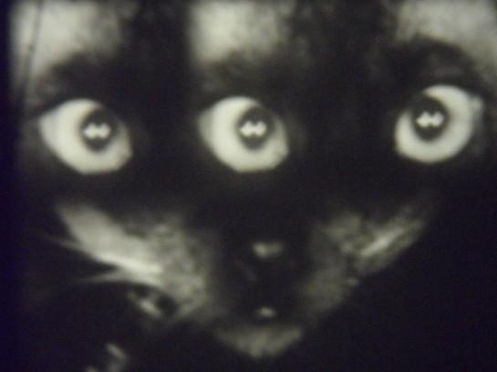 3eyedcat